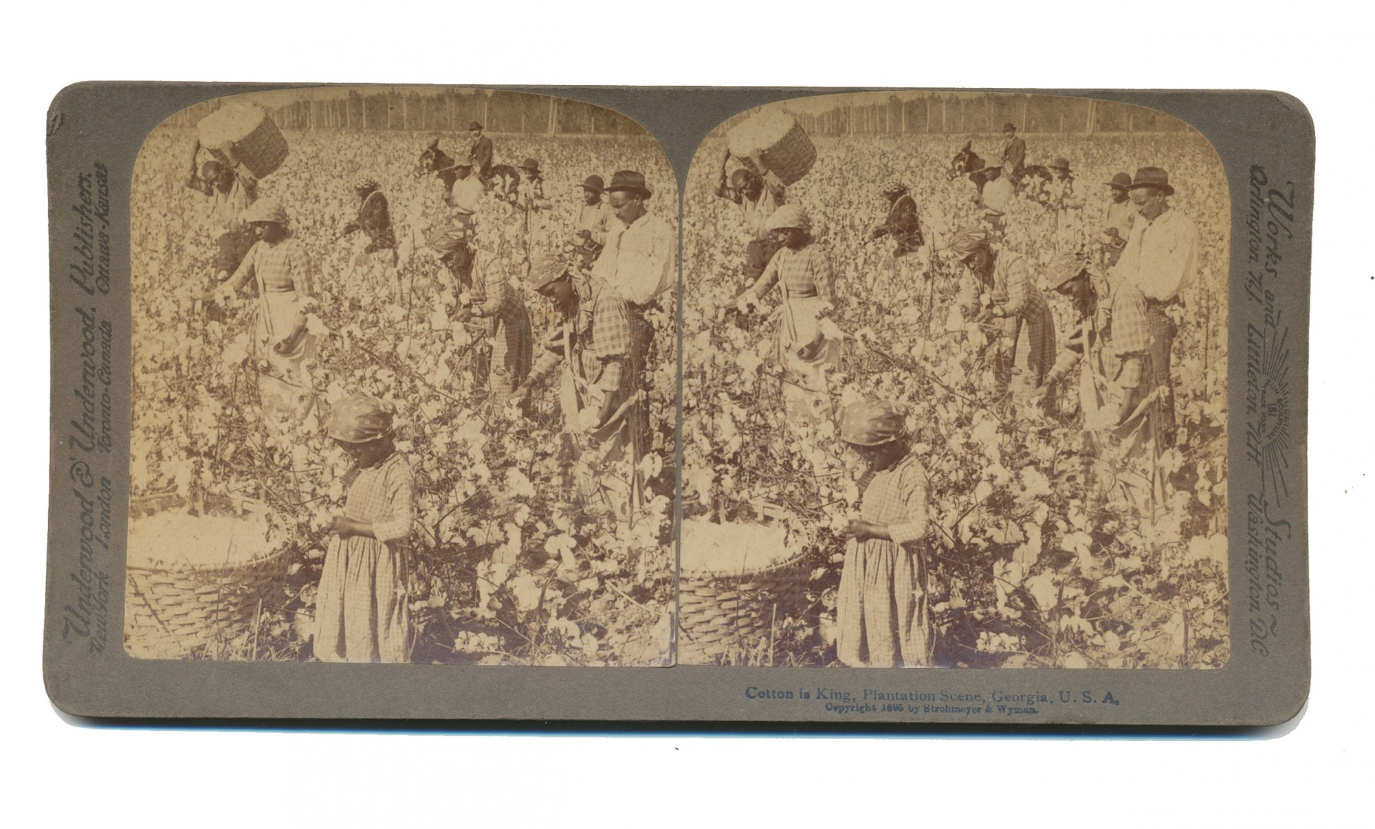 STEREO CARD OF COTTON PICKING IN PROGRESS