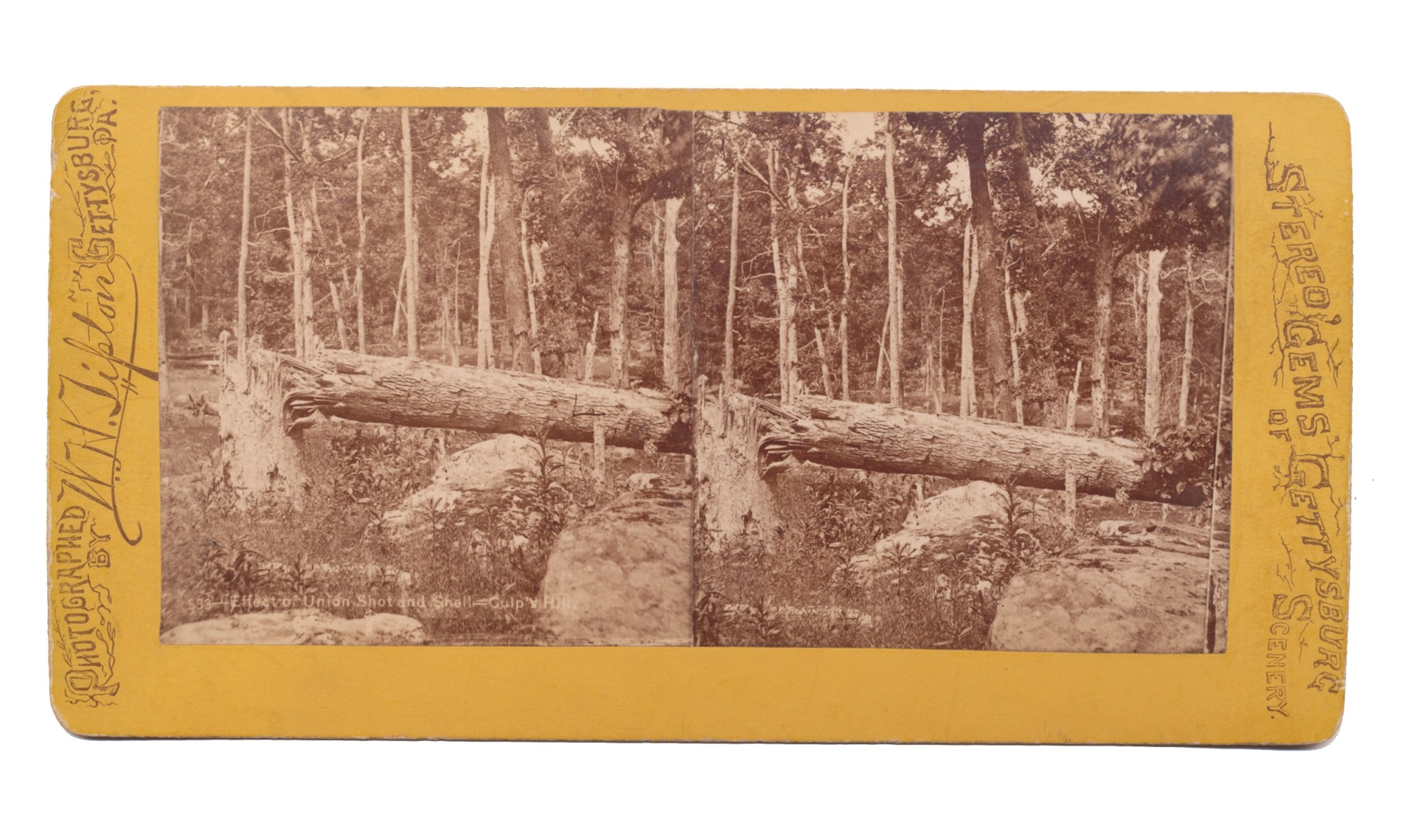 TIPTON STEREO VIEW OF BATTLE SCARRED TREES ON CULP'S HILL