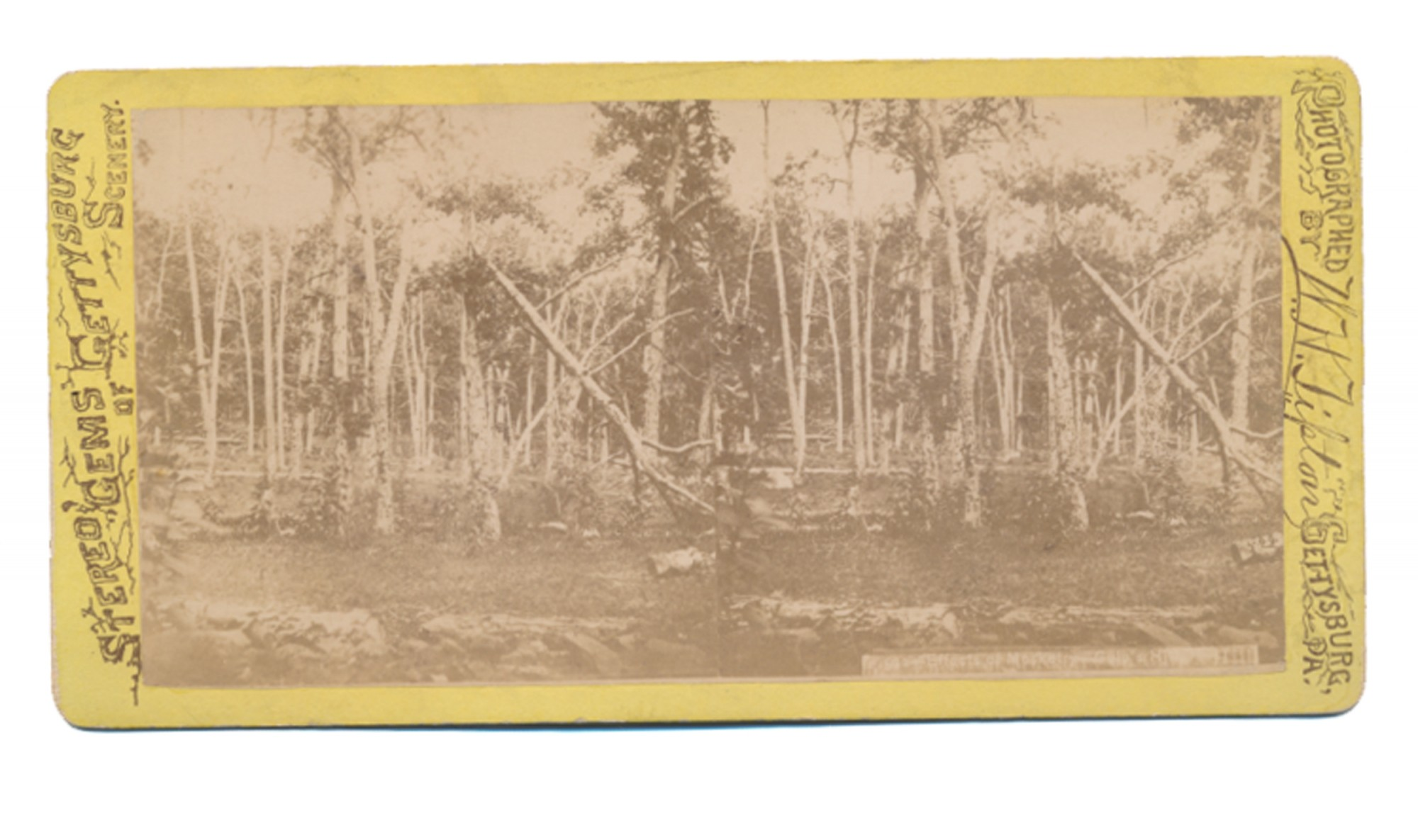 TIPTON STEREOVIEW OF THE BATTERED WOODS ON CULP'S HILL
