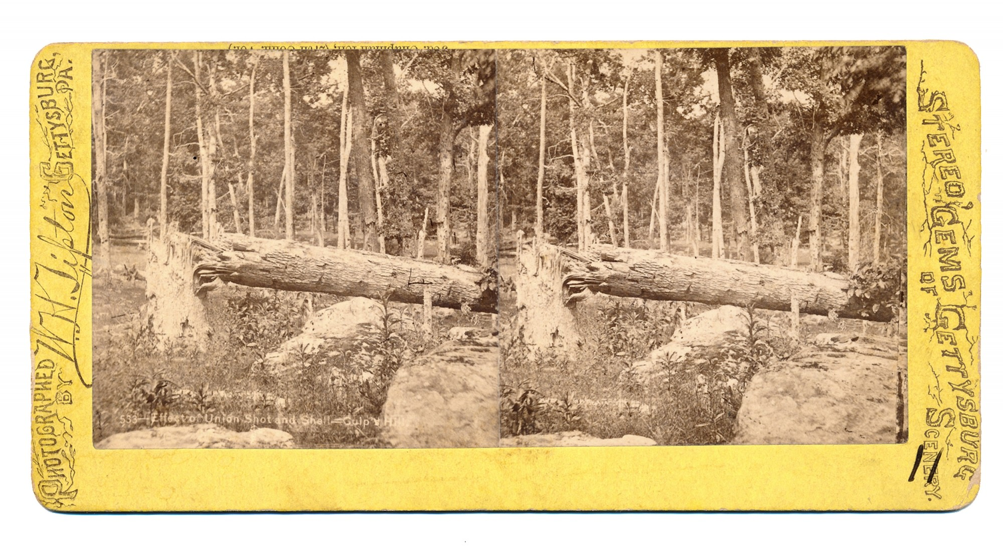 TIPTON STEREO VIEW OF BATTLE SCARRED TREES ON CULP'S HILL, GETTYSBURG