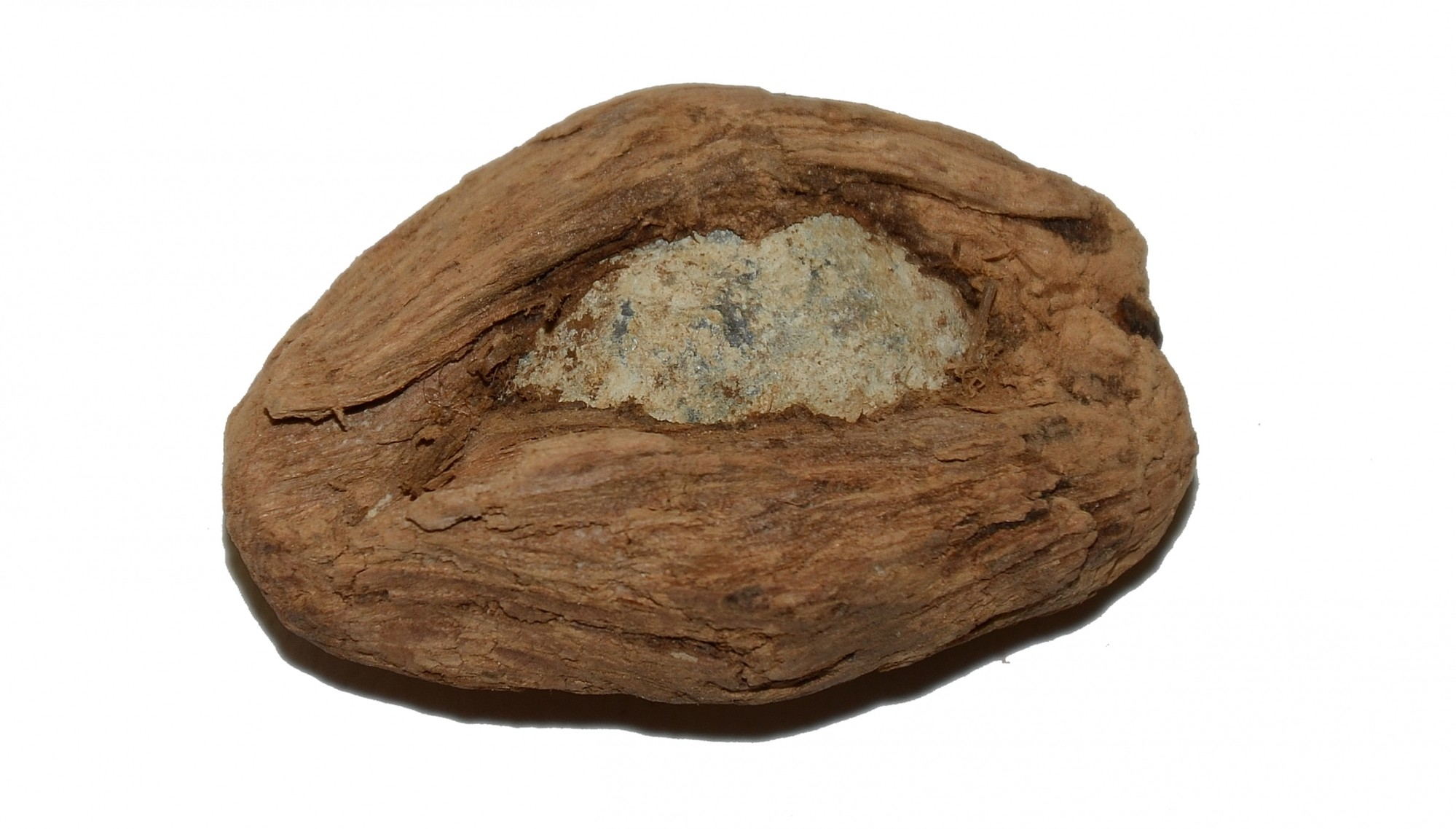 BULLET IN WOOD RECOVERED AT CHANCELLORSVILLE, VA
