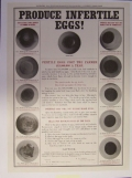 PRODUCE INFERTILE EGGS