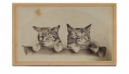 CDV PAIR OF TABBY CATS