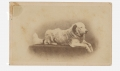 CDV OF LARGE WHITE DOG