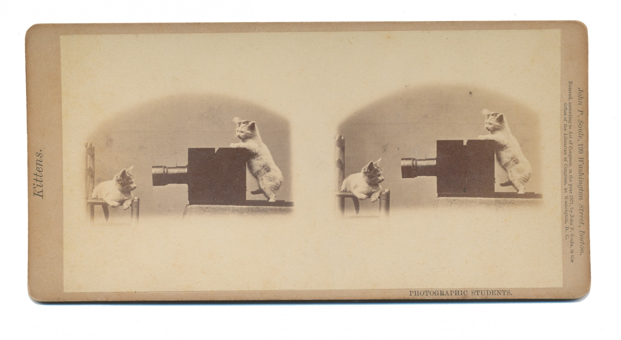 "STEREOVIEW OF KITTENS – ""PHOTOGRAPHIC STUDENTS"""