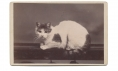 CABINET CARD OF WHITE AND BLACK CAT