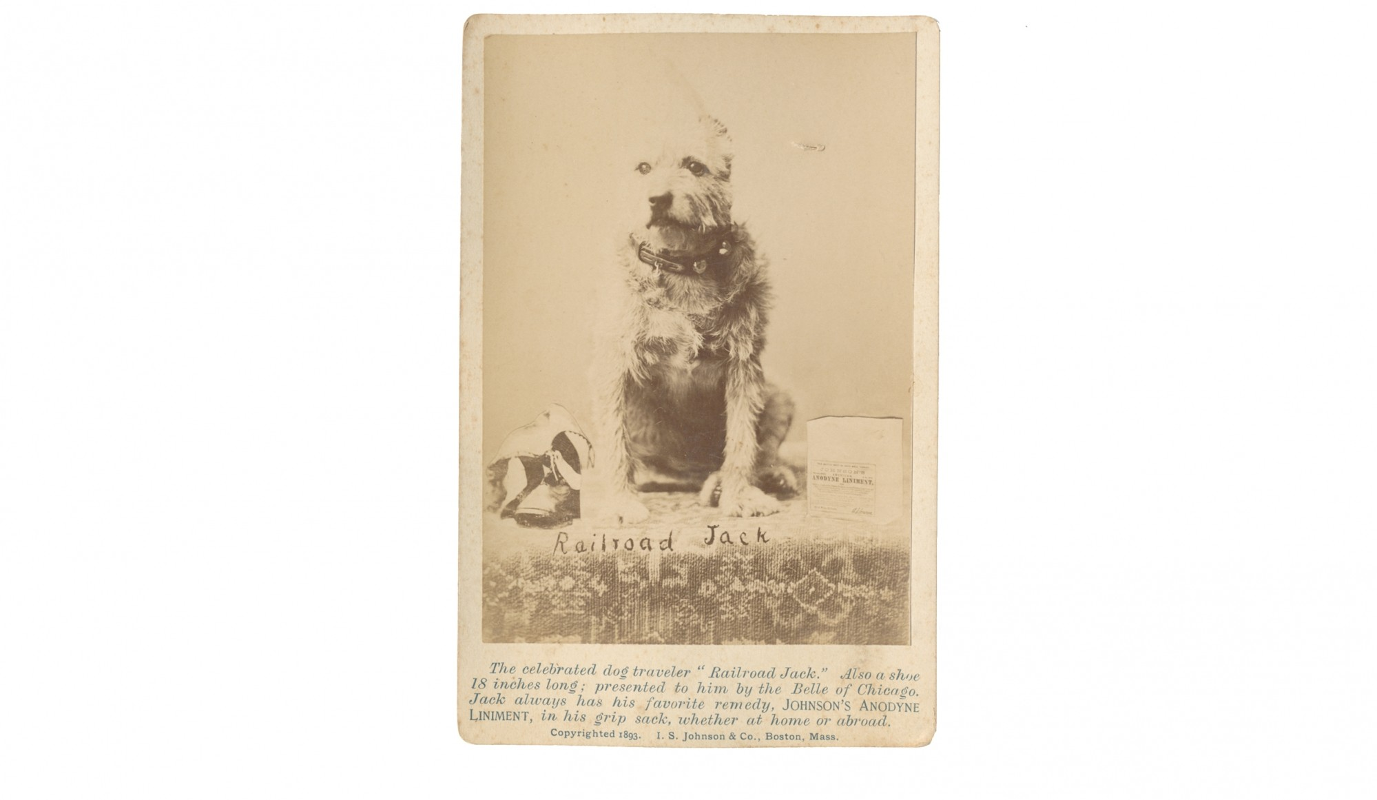 "CABINET CARD OF DOG ""RAILROAD JACK"" – JOHNSON'S ANODYNE LINIMENT ADVERTISEMENT"
