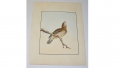 "WILLIAM LEWIN ""BIRDS OF GREAT BRITAIN"", VERY RARE 1ST EDITION ORIGINAL WATERCOLOR, DATED 1790"