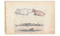 1862 SKETCH OF ANIMALS AND THE WASHINGTON NAVY YARD FROM 9TH MASSACHUSETTS BATTERY ARTIST RICHARD HOLLAND