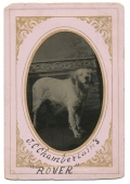 "TINTYPE OF A WHITE DOG NAMED ""ROVER"""