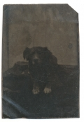1/8 PLATE TINTYPE OF A DOG