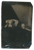 TINTYPE OF A PUPPY