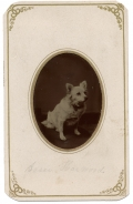 TINTYPE OF WHITE DOG, IN A CDV MOUNT